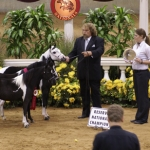 2009 AMHR National Get of Sire