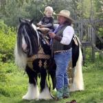 Gypsy Vanner Stallion Lucky