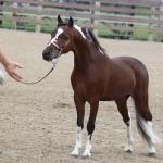 SMHC'S Top Dollar Stallion